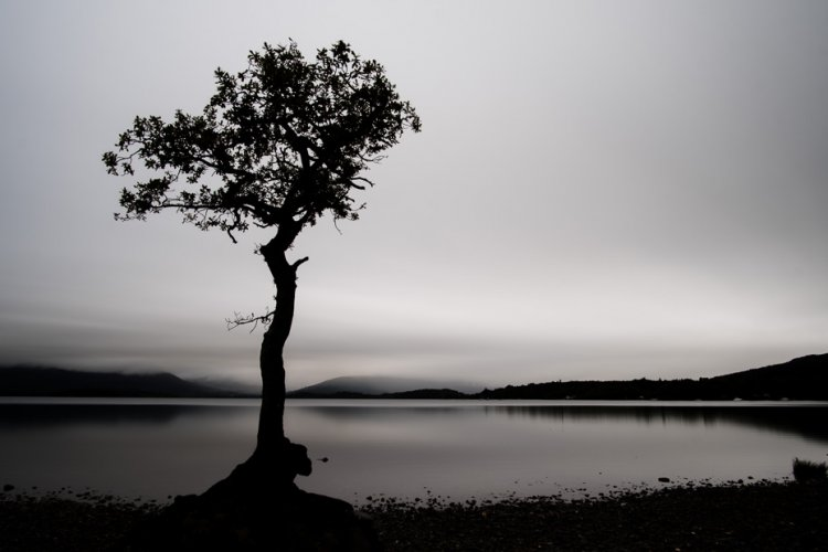 A lonely tree silhouetted on the banks of Loch Lomond in mono